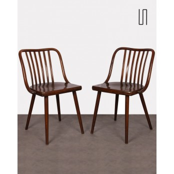 Pair of Czech chairs by Antonin Suman, 1960s