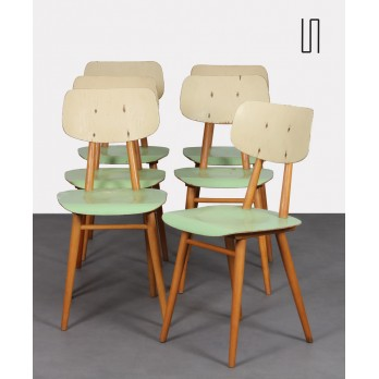Suite of 6 Eastern European chairs for Ton, 1960s
